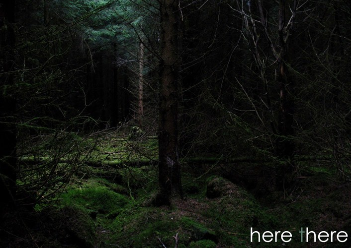 Coniferous forest essay